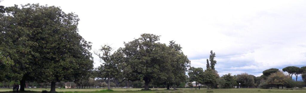 macchia e i grandi alberi imponenti
