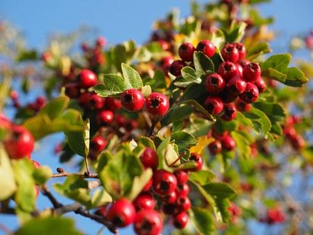 Questa immagine ha l'attributo alt vuoto; il nome del file è berries-693918__340.jpg